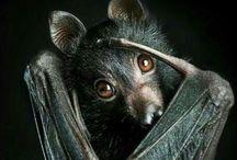 Bats / #bats
