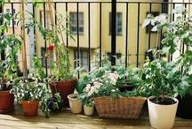 Gardens / Balconies / Patios