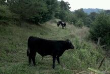OvenPOP Farm Days / OvenPOP 360 Farm Days in Marshall, NC