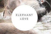 Elephant Love / All things elephant.