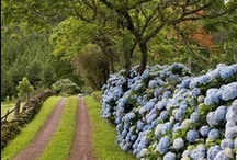 Stroll through a garden