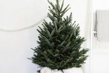 W I N T E R / An ode to Christmas and winter. A cold but magical wonderland of snow, mistletoe, food, festive spirit, Santa and gift ideas.