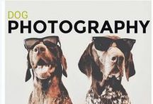 Dog Photography / Gorgeous images of my favourite subject... dog's of course