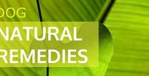Natural Dog Remedies / Herbal medicine and natural remedies for dog health and wellbeing.