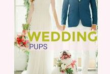 Wedding Pups / Dog friendly weddings. Your special day wouldn't be complete without your best friendly your side.