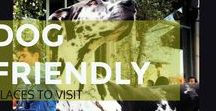 Dog Friendly Places To Visit / A collection of dog friendly cafes, parks, beaches etc from around the world.