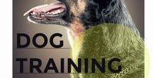 Dog Training / Dog training and behaviour