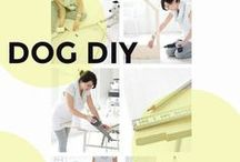 Dog DIY / Exciting DIY dog projects to try out
