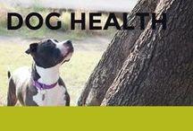 Dog Health / Dog health tips and advice for a range of dog health problems.