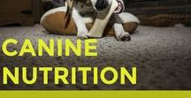 Dog Nutrition / Dog health food and nutrition, as well as tips on feeding your dog a healthy diet for optimum health.