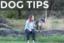 Helpful Dog Tips / Helpful dog tips and hacks to make life with your pooch easier and more awesome