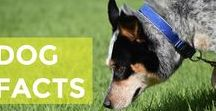 Dog Facts / Interesting facts about dogs because who doesn't love a little doggie trivia.
