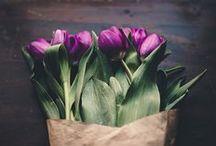 Fleurs / by Marysa Taylor