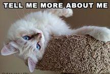 Cats, Cats, Cats! / Cats... cats... and cats. ;)