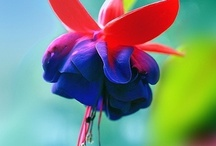 Gardening/Flowers / by Jacks Mom