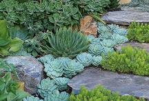 Garden Guru / So i'll admit it, i'm slightly obsessed with succulents  / by Danielle Villoria