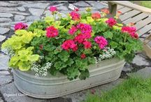 Great Container Gardens / Container gardens I admire.   / by Organized Clutter