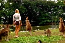 Must Dos in Oceania / All the things a visitor to Oceania must do