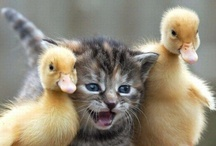 Cute Animals / by Arlene Grant
