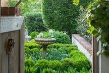 garden / by Jenny Honda