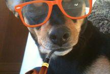 My dog / Rambo the best