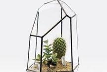 Interieur Planten en Groen | Plants / Een touch of green in je interieur. Zoveel mooier! #planten #styling