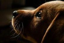 Puppy love. <3