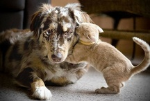 Other adorable animal love. <3
