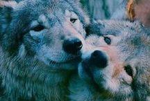 nature creatures/animal