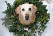 It's the most wonderful time of the year! / by Lori Flaherty