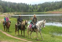 Gaited Horse Adventures /  Family adventures and our 4 gaited horses!