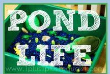 Pond Theme