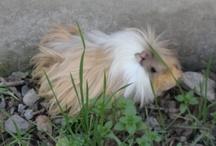 mis mascotas u otros animales lindos  / aquí encontraran fotos de mis mascotas o de otros animales que encuentro lindos