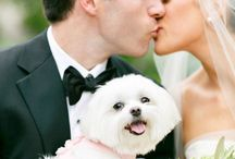 Mascotas | Pets | Animais de estimação / Como incorporar tus mascotas en este dia tan especial? Con estas ideas fabulosas!!!
