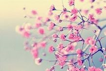 Spring 2014 Inspirations