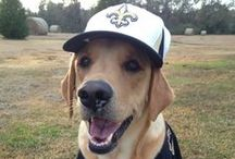 Saints Dogs / Pictures of dogs supporting the New Orleans Saints submitted by fans! Want to add to the collection? email a pic to saintsdogs@gmail.com / by New Orleans Saints