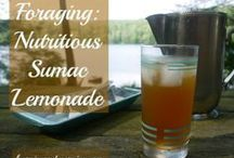 Foraging & Wildcrafting for Food and Medicine / Do you want to learn to forage for food, or wildcraft herbs for your home medicine chest? You're in the right place!