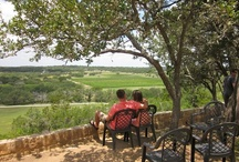 Vino / visits to Texas wineries