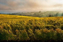 Oregon Wine Country / Welcome to the gateway to Oregon wine country: the northern Willamette Valley. Washington County has the closest cluster of wineries to Portland (most with tasting rooms), and our award-winning wines have made this a must-visit wine destination.