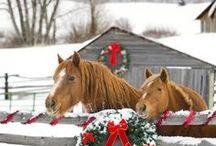 Horses / by Maritza Valentin
