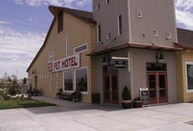 City of Elk Grove, CA   / Interested in knowing what's going on in Elk Grove, CA? Follow my pins about our great City!  I live and work in Elk Grove and I grew up here . #elkgroverealtor