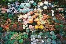 GARDEN: Succulents & Water Gardens