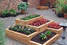 Gardening / by Christian Donaldson
