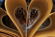 Cats / by Diane Roush