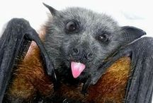 Bats / Lessons, activities, and arts and crafts ideas for teaching about bats in the elementary classroom.