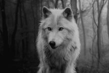 Wolf love / Wolf, wild, beautiful