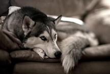 Man's Best Friend / Dogs, puppies, mans best friend, love