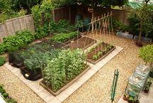 Edible Garden  / Ideas for our edible garden