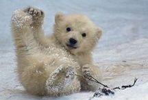 Chillsworth / Polar Bears / by Kelly Anderson
