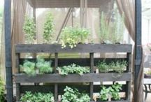 Vegetable & Herb Gardens / Vegetable and Herb gardening ideas
